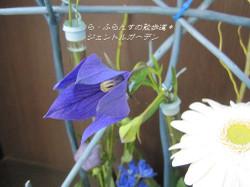 2012_0629_080412img_1236