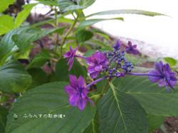 160716181605149_photo
