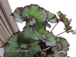 160716181330994_photo