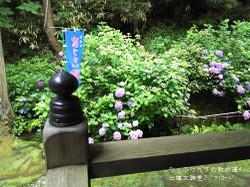 160716104046155_photo