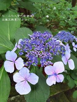 160716104538012_photo