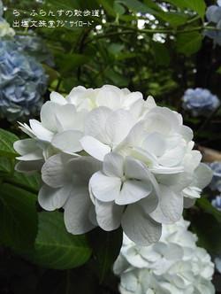 160716104957956_photo