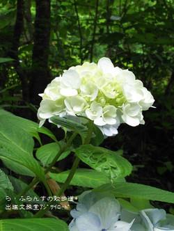 160716105014137_photo