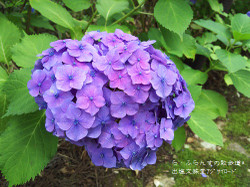 160716105932382_photo