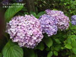 160716110020306_photo
