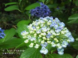 160716110050135_photo