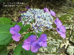 160716110128403_photo