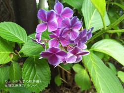 160716110208787_photo