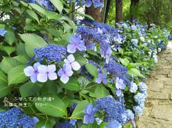 160716110256078_photo