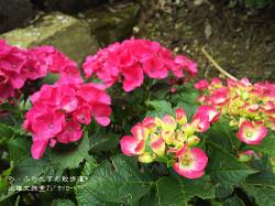 160716110738696_photo