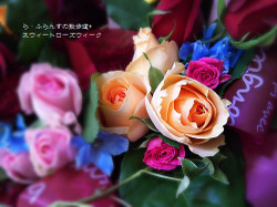 170519075728636_photo