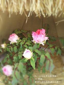 180210161827704_photo