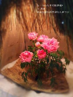 180210174136366_photo